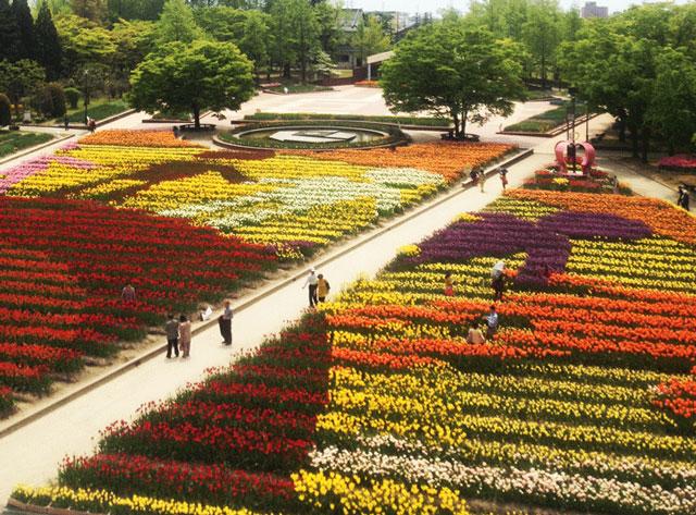 砺波チューリップフェアの大花壇