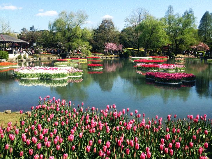 砺波チューリップフェアの水上花壇