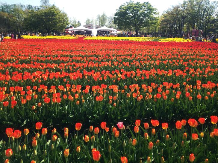 砺波チューリップフェアの大花壇とステージ
