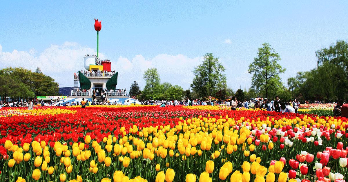 多くの観光客が訪れる人気イベント「砺波チューリップフェア」
