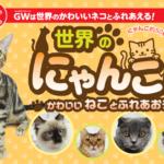 猫好き必見!世界のにゃんこ展。GWはファボーレで猫に癒される☆