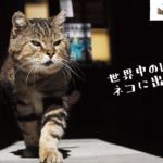 【とらねこ写真展 inイオンモール高岡】動物写真家 岩合光照(いわごうみつてる)による写真展のバナー
