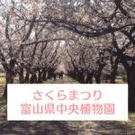 【第8回さくらまつり2019】富山県中央植物園のお花見イベント!