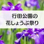 【滑川市の花しょうぶ祭り】行田公園ではライトアップにガイドツアーも!