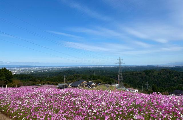 砺波市の夢の平スキー場で開催される「となみ夢の平コスモスウォッチング」を見下ろしたところ