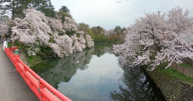 高岡古城公園の赤い橋と桜