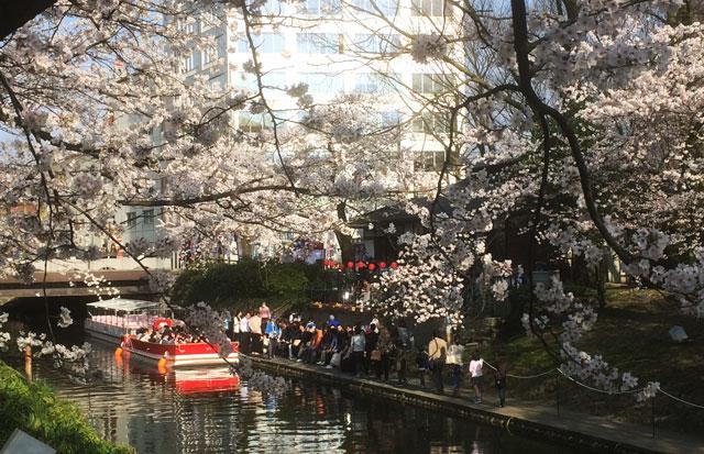 富山市の桜の名所松川の「松川遊覧船花見クルーズ」
