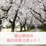 【富山の桜 お花見スポット】桜の名所70選、イベント、開花予想まとめ!