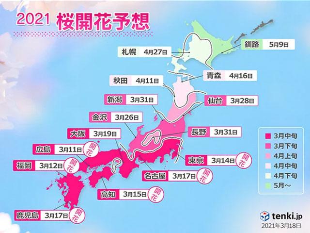 日本全国の桜の予想開花日と予想満開日2021(tenki.jp)