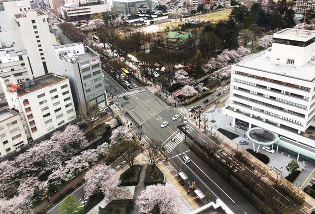 富山市役所の展望台からの松川べりの桜の花見
