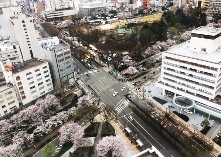 富山市役所の展望台からの花見