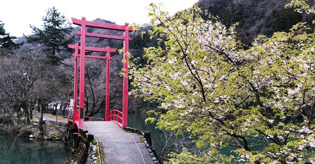 富山県砺波市庄川水記念公園の花見