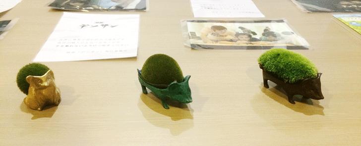 映画「デンサン」のはりねずみの盆栽