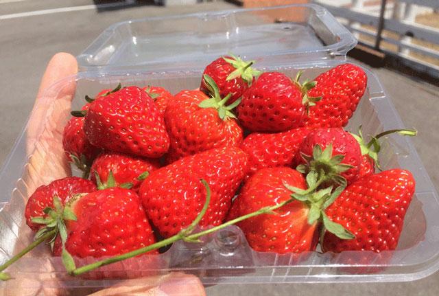 梅香園、梅香のしずくで、パックに詰めたイチゴ狩りの苺