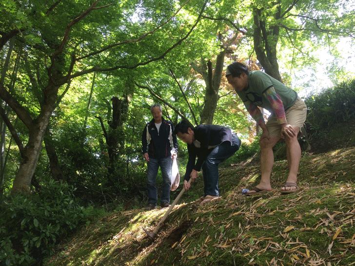 八尾の城ヶ山でタケノコ掘り起こし