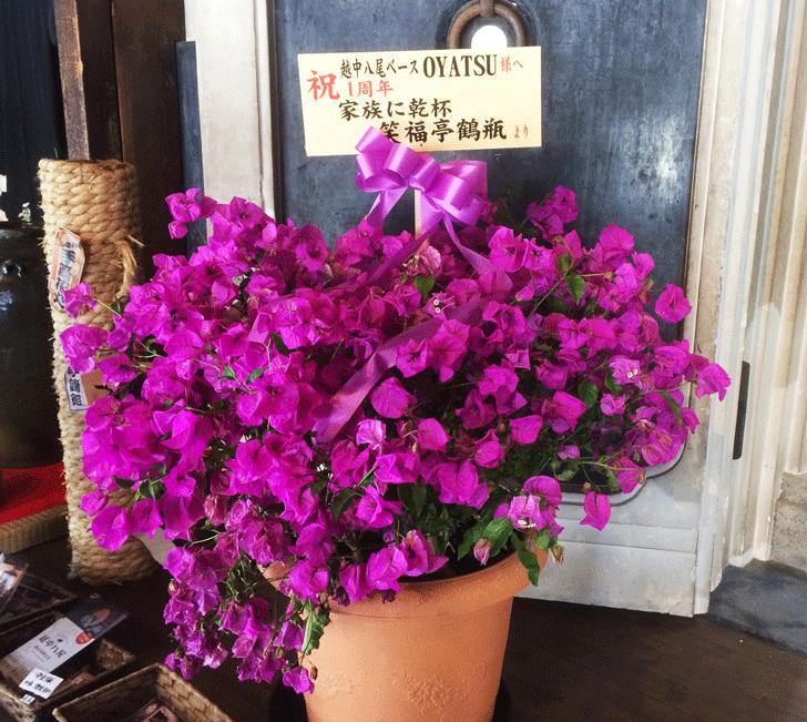 鶴瓶さんが送ってきた1周年祝いの花
