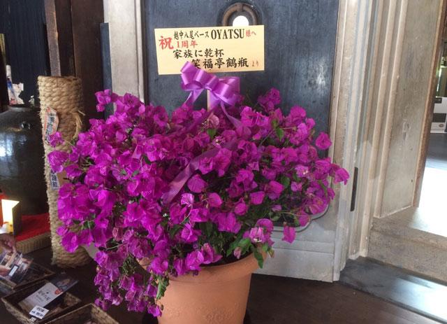 越中八尾ベースおやつに鶴瓶さんが送ってきた1周年祝いの花