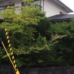 生い茂った庭の樹木