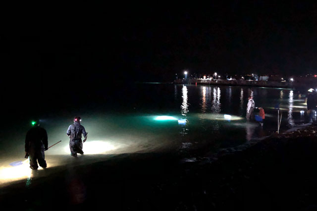 八重津浜のホタルイカすくいの水中ライト