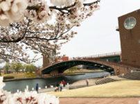 桜満開の富岩運河環水公園でお花見