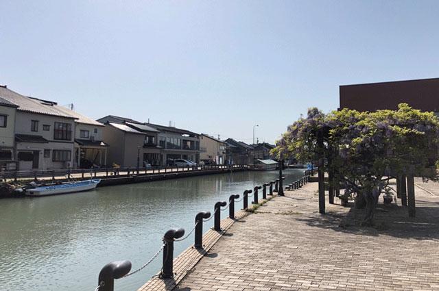 映画ロケ地の観光スポット「日本のベニス新湊内川」の藤の花