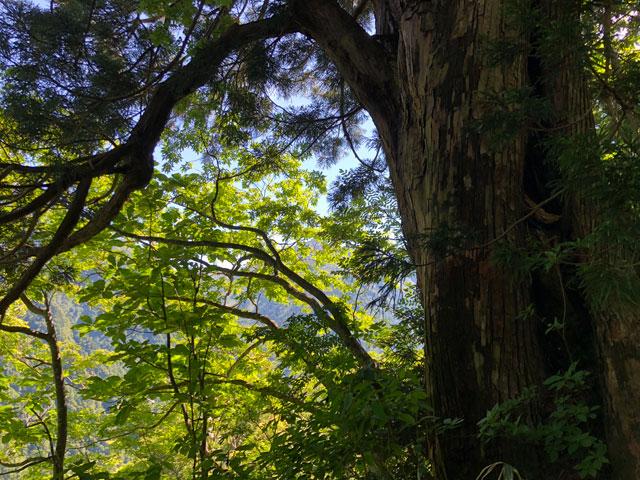 中山登山の途中で見られる木と緑