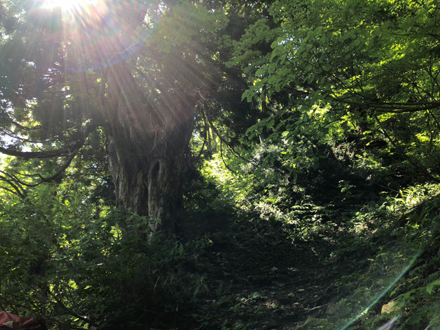 中山登山途中で見た光が差し込む神聖な木