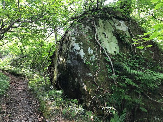 大日平までの登山道にある根っこがびっしりの巨石