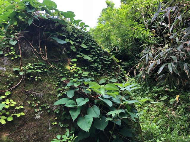 大日平までの登山道にあるいい感じの草が生えた巨石2