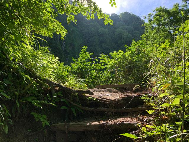 大日平までの登山道の木漏れ陽と緑