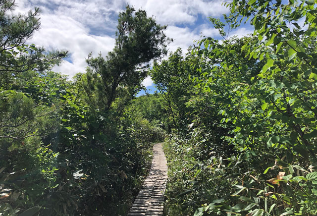 大日平までの登山道にある木道