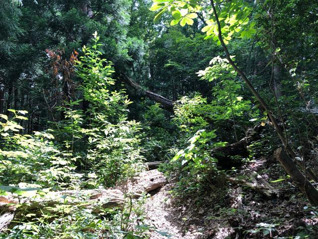 尖山(とんがり山)夏椿峠登山口の獣道