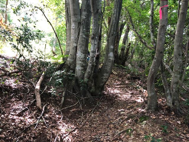 尖山(とんがり山)夏椿峠登山口の山道