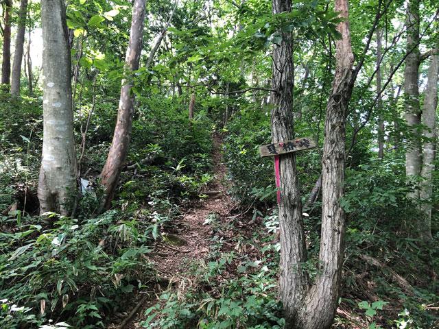 尖山(とんがり山)夏椿峠コースの案内看板