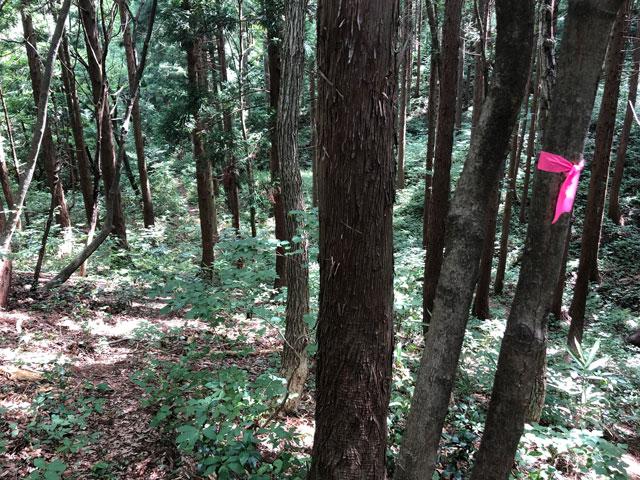 尖山(とんがり山)夏椿峠登山口の赤いリボンの目印