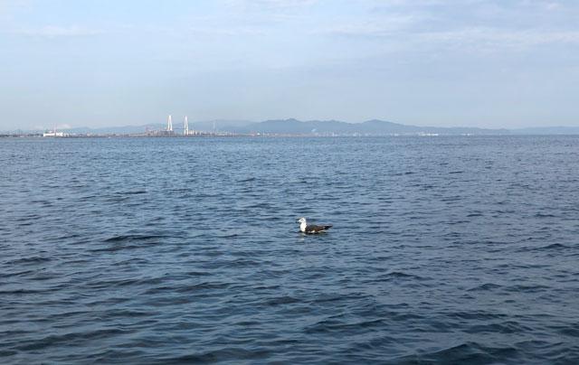 海上を漂う鳥