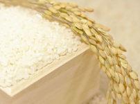 新米を食べ始めるタイミングが難しい!古米が残っているときどうする?