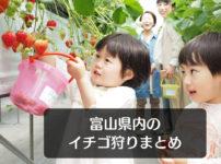 【富山のいちご狩り2019】イチゴ狩りスポット7選!料金や場所まとめてみた☆