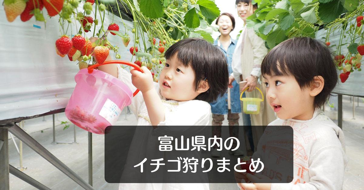 【いちご狩り富山2019】イチゴ狩りスポット7選!料金や場所まとめてみた☆