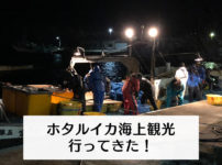 【ホタルイカ海上観光船 口コミレビュー】予約方法、ツアー中止リスクと代替プラン!