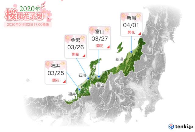 富山県の桜の開花予想日2020