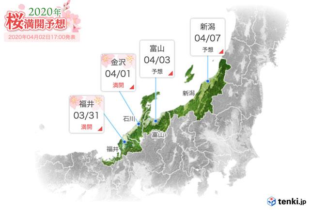 富山県の桜の満開予想日2020