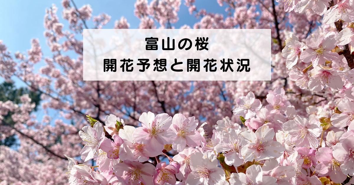 【富山の桜 開花予想と開花状況】花見前に要チェック!効率的に満開を狙う方法☆