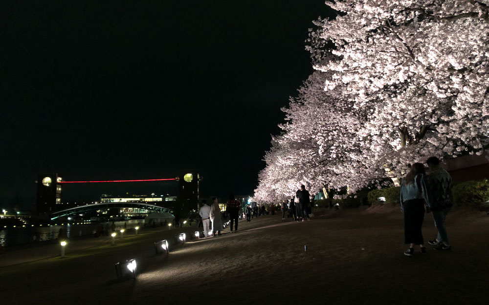 富山市の富岩運河環水公園の夜桜ライトアップ