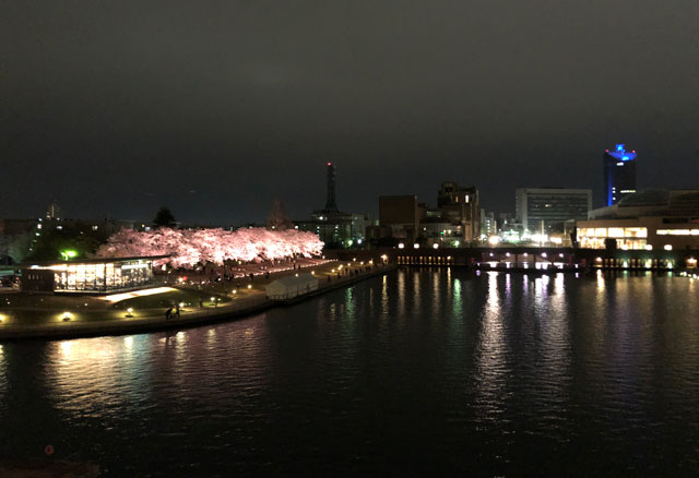 富岩運河環水公園の夜桜ライトアップ(遠)