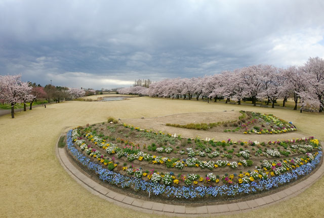 富山県中央植物園の桜の広場と花壇
