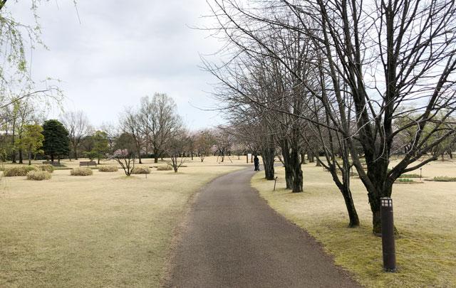 富山県中央植物園の舗装された道