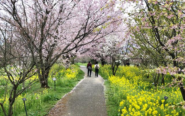 富山県中央植物園の桜以外の植物