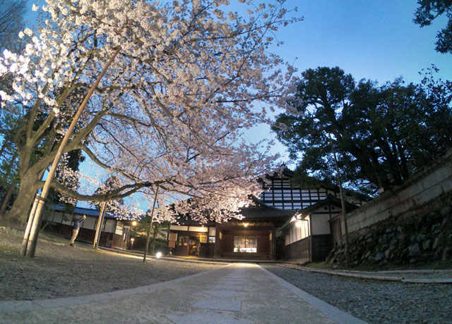 国登録有形文化財、富山県民会館分館「豪農の館 内山邸」 の桜ソメイヨシノと建物を見上げた写真