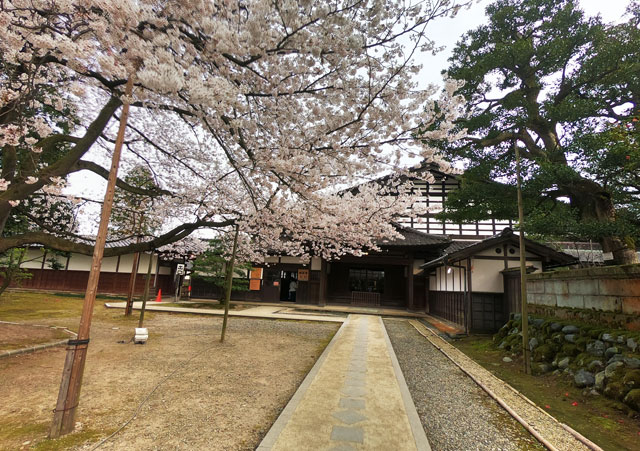 国登録有形文化財、富山県民会館分館「豪農の館 内山邸」 のソメイヨシノと建物入り口